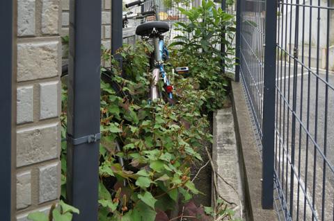 我が家の裏の状態。草むしり以前にいろいろ問題がある(なぜに自転車が・・・?)