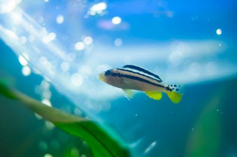 ほんと,カワイイ小魚さんだったんです・・・。