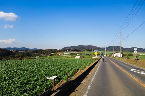 半島の中央部ものどかでいいんです。プチ北海道です。