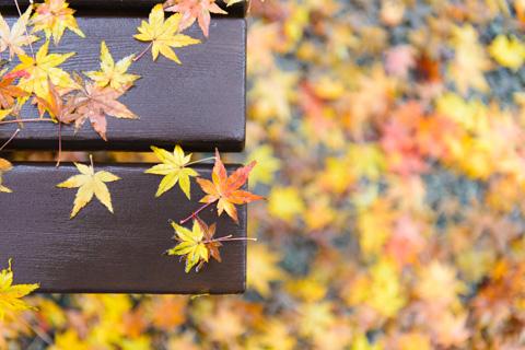 鮮やかな,円覚寺のベンチ♪ 【雨の鎌倉紅葉&竹林アルバムはこちら~】