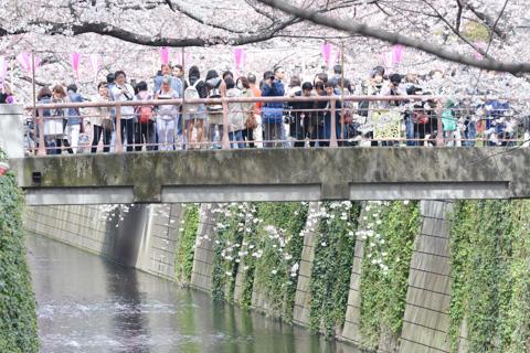 こんな風に,橋の上から桜を撮れます。真下って,意外と盲点なんですけど(^^)