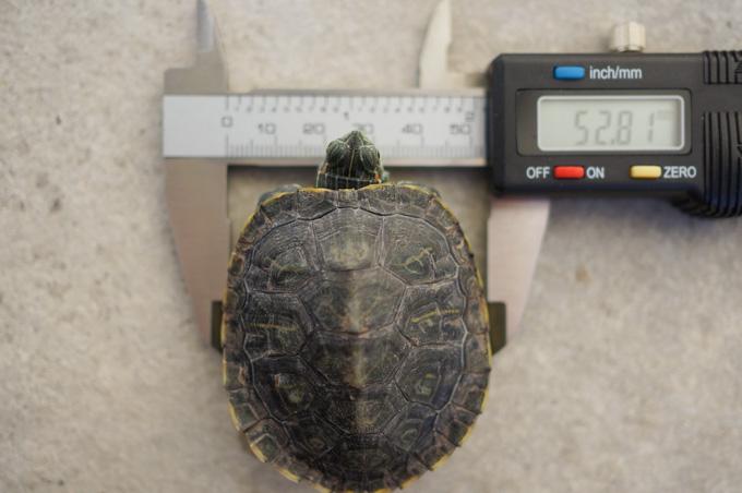 身体測定中。成長の速度は少し遅くなってきた・・・か?