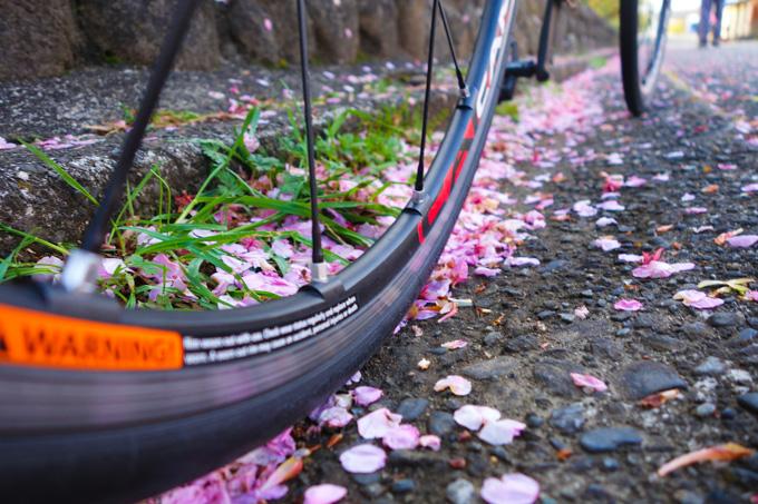 河津桜は咲くのが早いけど,散るのも早い(涙)