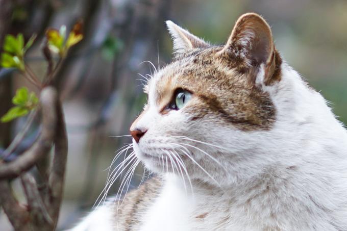 猫の目まで拡大。こんなシャープに写っているなんて!