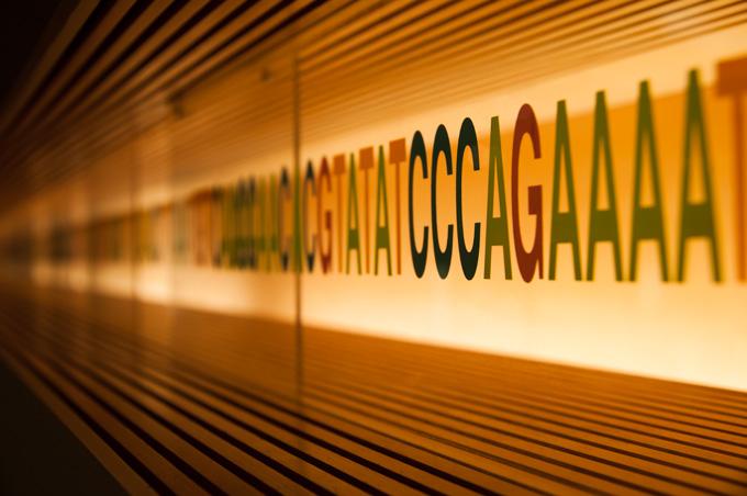 A,T,G,C(アデニン,チミン,グアニン,シトシン)。この4つの塩基の並びで遺伝が決まる。なんとも,単純だけどすごいですよねぇ・・・。