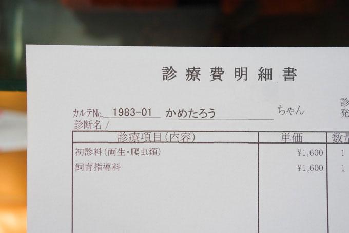 これで,「かめたろう」が公式名称に決定!(^^)