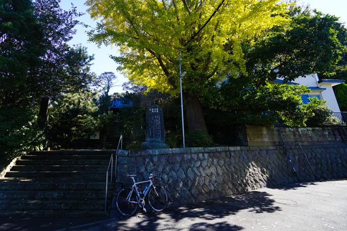 鎌倉の安国論寺。入り口のイチョウが見事です。