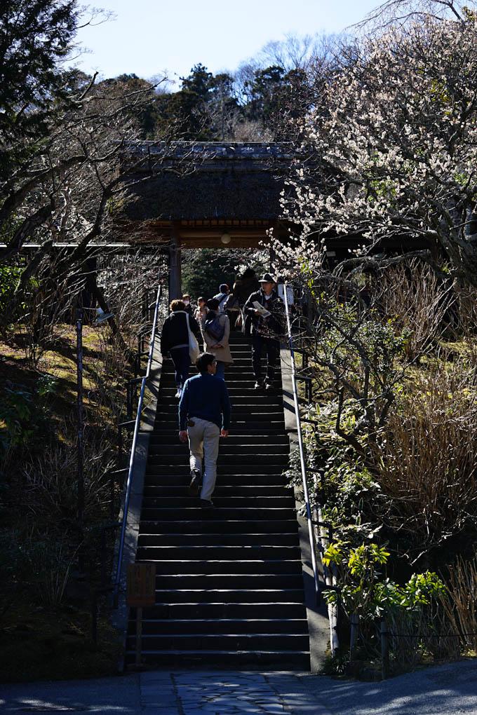 山門からしてこじんまりしています。円覚寺の1/10スケールです(^^)