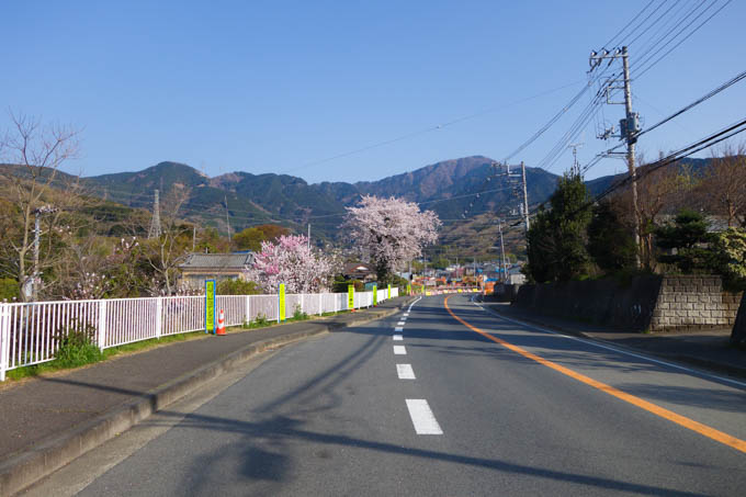 桜があちこちで咲いていてきれいでした。相変わらず、真剣みが足らないですね(^^;