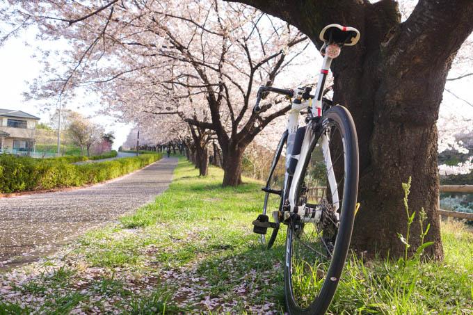 今年は、桜写真はあんまり撮れませんでしたが、これはお気に入り(^^)