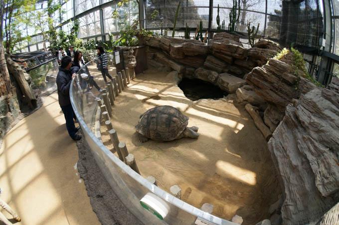 上野動物園にて。パンダより、ゾウガメです(^^)