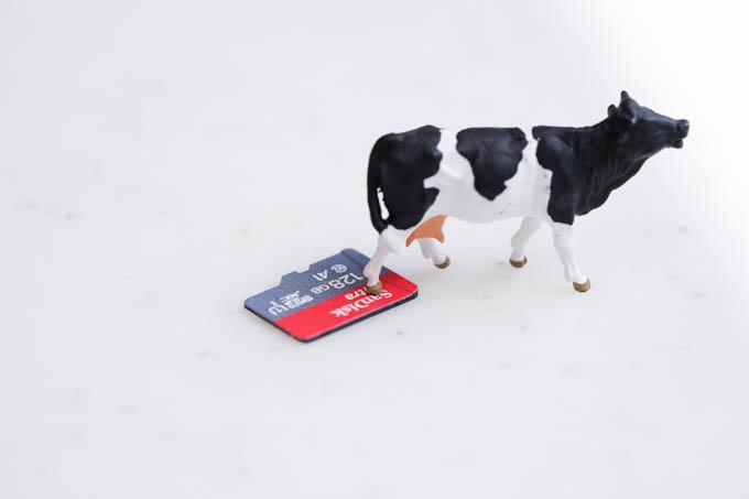 こちらは現代のmicroSD。牛が踏んでも壊れ・・・ます。