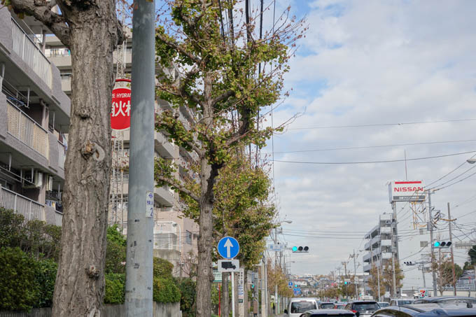 道中のイチョウ並木。今年はどこも、こんな感じです(涙)
