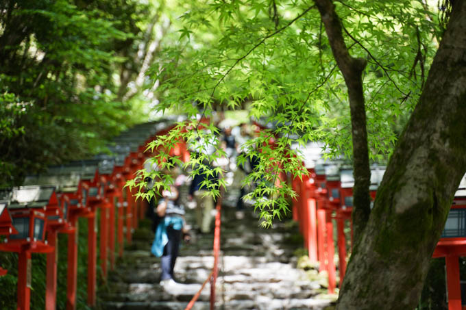 京都は新緑が美しい季節でした。