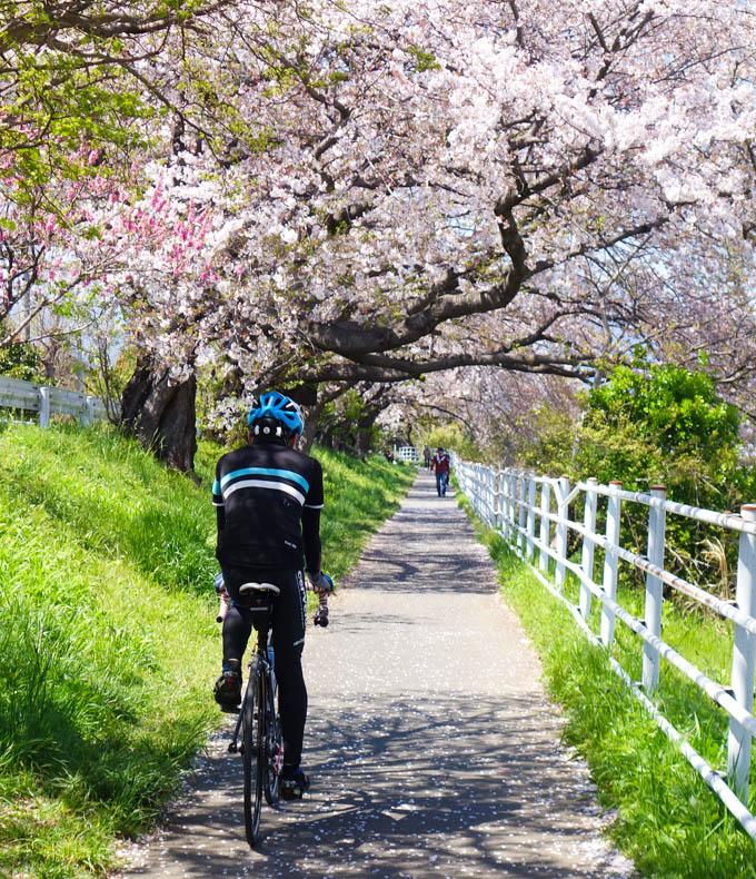 金目川CR。桜のピークは過ぎちゃったけど、のんびりのどかなCRです。