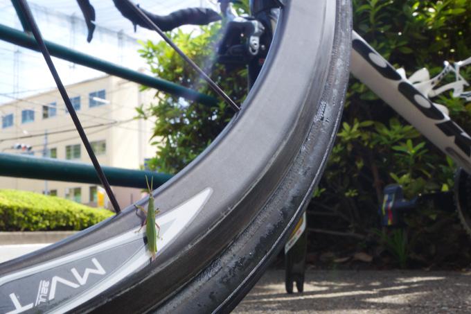 タイヤの側面全体からシーラントが滲みでていました(なぜかバッタが・・・?)