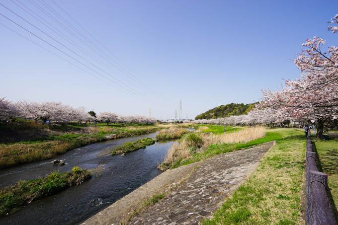 川の両岸とも桜並木が続きます。