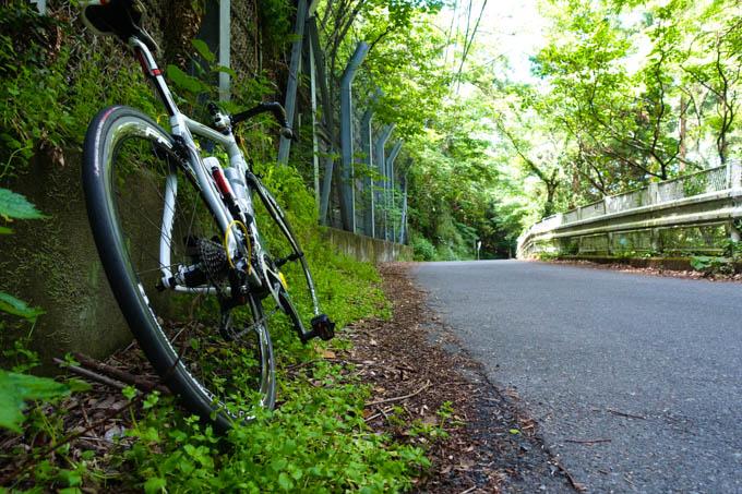 国際村へ上る裏道。とにかく緑が豊かです。