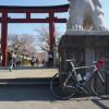 桜パトロール2012(その1)