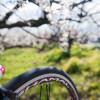 [つぶやき]春はすぐそこに(^^)