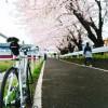 境川CR桜トンネル2009