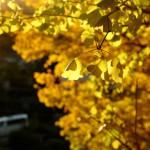 鎌倉にもようやく紅葉がやってきた!(写真整理完了編)