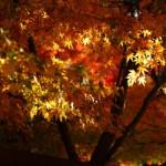 鎌倉にもようやく紅葉がやってきた!(朝ポタ速報)