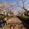 本日の朝ポタ(鶴岡八幡宮桜定点観測)