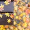 見頃です! 雨の鎌倉紅葉&竹林見物 /w ツマ