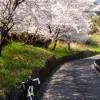 春の桜ロングツーリング(小田原~根府川~湯河原~大観山!)