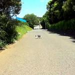 サイクル・チャレンジ・カップ・藤沢,予想コースを試走!